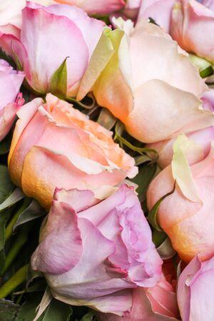 Background from hybrid tea roses and floribunda on a black background.