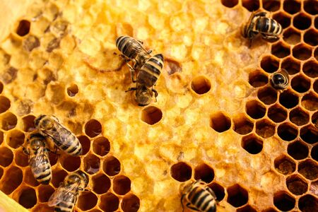 A lot of bees on honeycombs in an apiary close-up. Apiculture