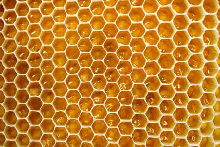 Golden honeycomb close up. Apiculture. Standard-Bild