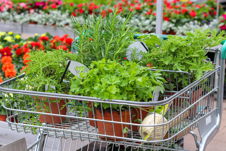 Seedlings of vegetables in pots in shop trolley. Shopping at garden center. Buying herbs and flowers in garden shop. Springtime. Stock Photo