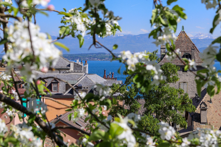 Beautiful view at blue Geneva lake or Lac Leman and French Alps mountains through blooming tree from Nyon, Switzerland