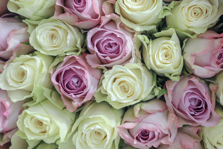 Bouquet of beautiful white and pink roses, close-up, top view. Roses background.