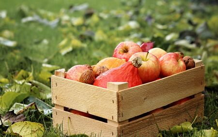 Harvest season. Wooden box with pumpkins, apples and nuts in garden with autumn leaves on green grass. Rainy weather. Autumn gardening. Happy thanksgiving day. Copy space. Selective focus Standard-Bild - 133145760