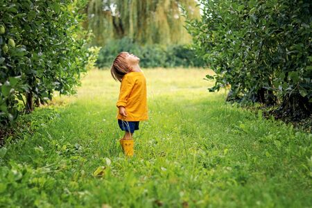 Cute little toddler boy in yellow top and rubber boots standing on green grass between rows of apple trees in orchard looking up at sky waiting for rain. Summer lifestyle. Carefree childhood Stock Photo
