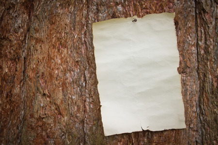 burnt wood: old antique piece of paper with burnt edges nailed to a large tree with coarse bark