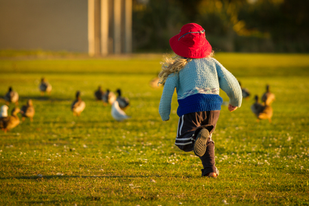 and four of the year: a four year old child wearing a bright red hat running and chasing ducks happily at sunset in the park.