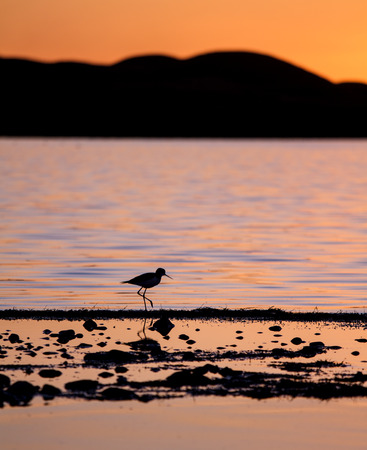 a small bird wading on the edge of a lake with the sunset colour reflected in the lake.