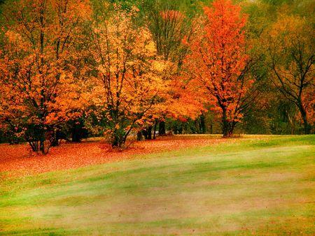 Les arbres d'automne  Banque d'images - 279650