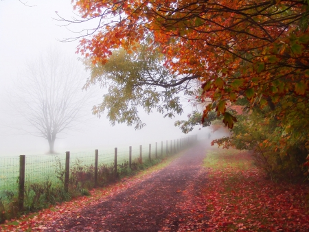 misty autumn morning path along fence in a  country setting 版權商用圖片
