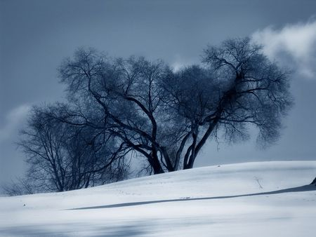 blanket of snow in front of trees - rural setting