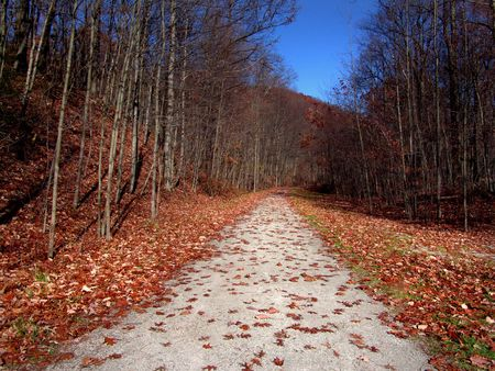 colorful path in the country - autumn