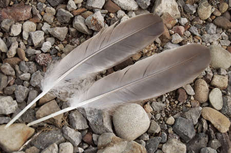 two bird feathers laying on stones in balanced contrast