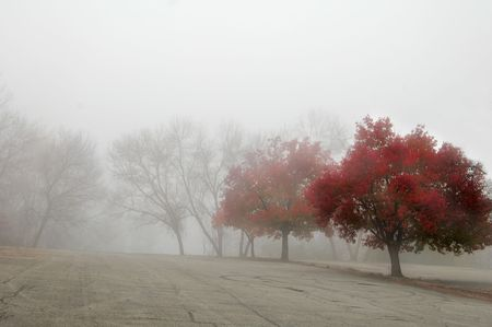 row of trees on a foggy morning Banco de Imagens