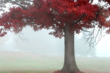colorful autumn landscape scene in foggy misty morning
