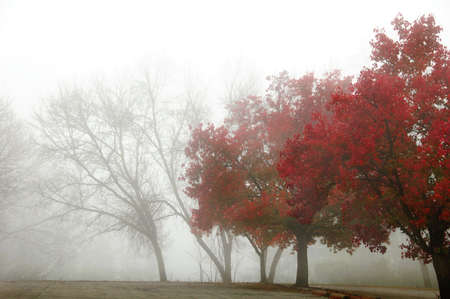 colorful foggy morning with row of trees