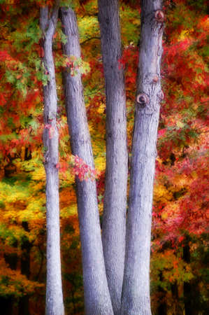 tree trunks with colorful leaves in the background Stock Photo - 2183390