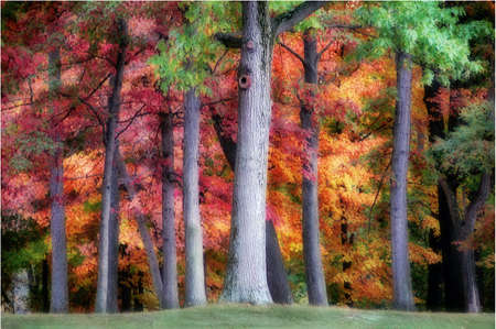 tree trunks with colorful autumn leaves in the background