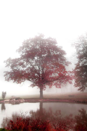 foggy autumn morning on pond with brilliant red foliage Stock Photo - 2330496