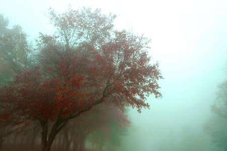 low key image of foggy autumn morning