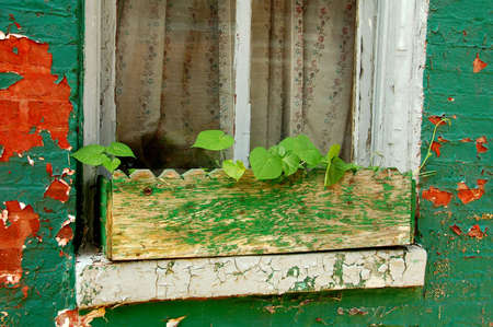 Flower box on windowsill with old peeling paint