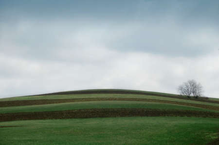 hill on farmland with cultivated rows and lone tree in background