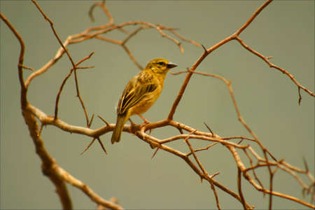 small yellow bird sitting on branches against peaceful pale green background Stock Photo