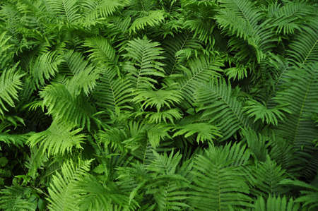 group of fern leaves growing in summer Stock Photo