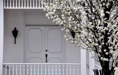 Entrance way of a white painted home with a white blooming tree
