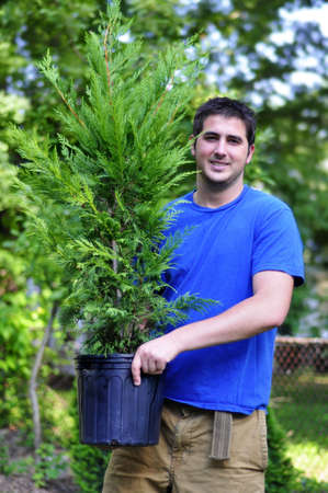 cypress tree: young man holding a Leyland Cypress tree in a pot Stock Photo