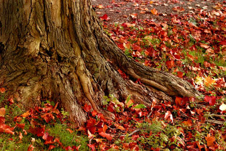tree trunk with beautiful colorful leaves Stock Photo