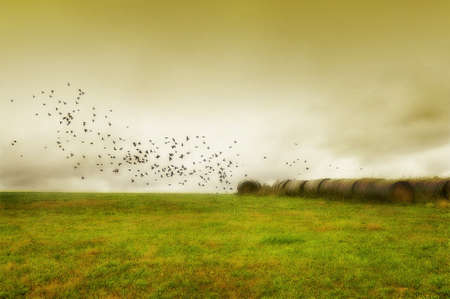 Serene Field with bales of hay and birds flying Stock Photo