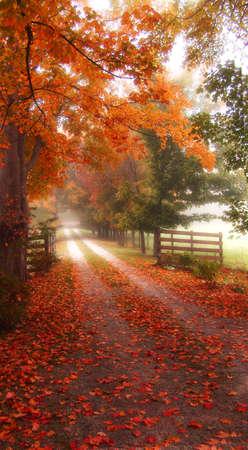 Kleurrijke herfst pad met hekken Stockfoto