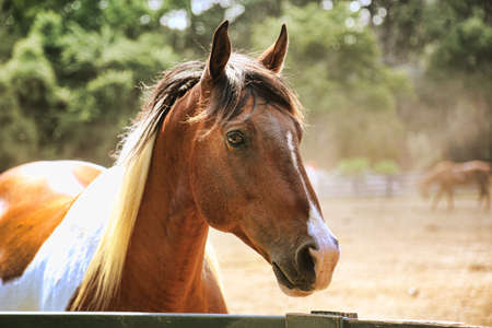 pretty horse standing at fence with horses in the background Stock Photo