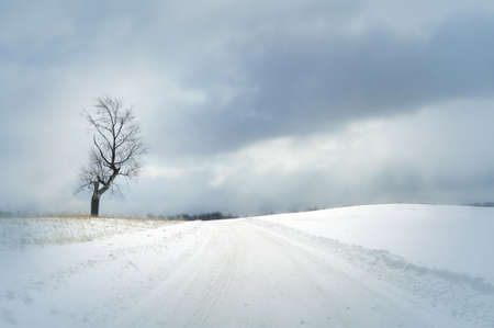 bright winter day with snow covered road and single tree and beautiful clouds photo