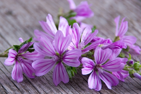 Wild mallow on rustic wooden background