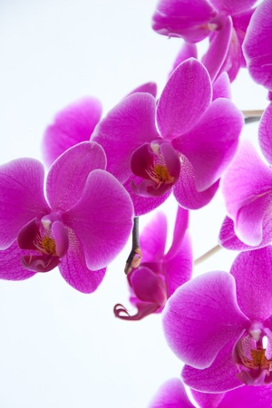 Beautiful Purple Orchid Detail