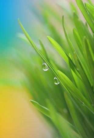 wheat grass: spring grass