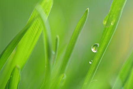 Close-up of small drop photo
