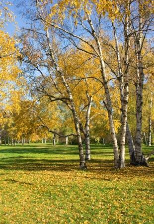 brich: Autumn in Kiev Botanical garden Stock Photo