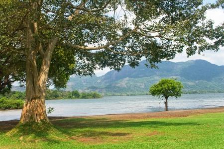 Sri Lanka.Dambula.Kandalama lake. photo