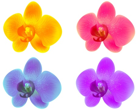 purple orchid: Illustration of orchids isolated on white background Illustration