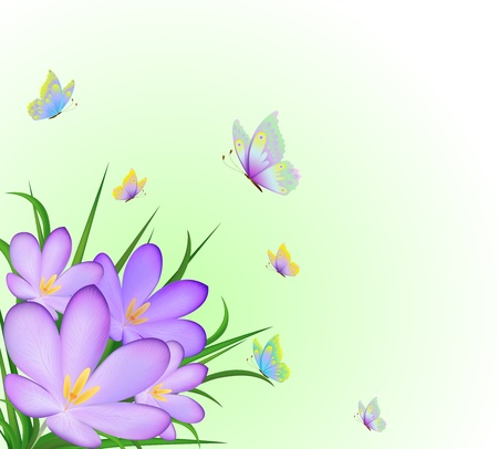 krokus: Illustratie van crocussen en vliegende vlinders