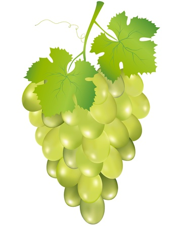Illustration of grapes isolated on white background Vector