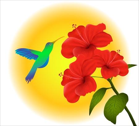 beautiful red hibiscus flower: Ilustraci�n de hibisco y tarareando ave