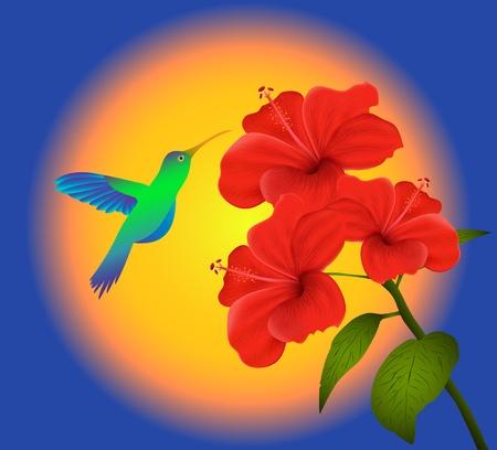 beautiful red hibiscus flower: Ilustraci�n de hibiscus y colibr�