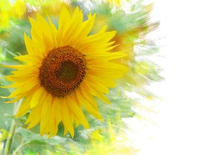 Close up of sunflower. Watercolor effect photo