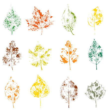 traced: illustration of watercolor traced leaves on white background