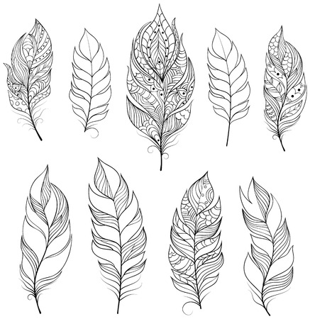 color tribal tattoo: illustration of feathers on white backgrounds