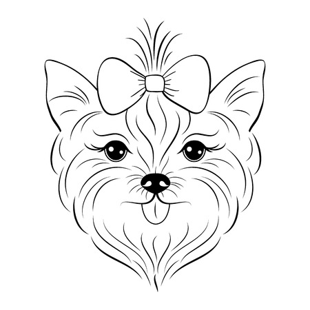 Head of yorkshire terrier in thin line illustration. Illustration