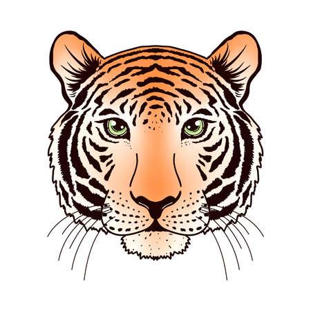 Tiger muzzle on white